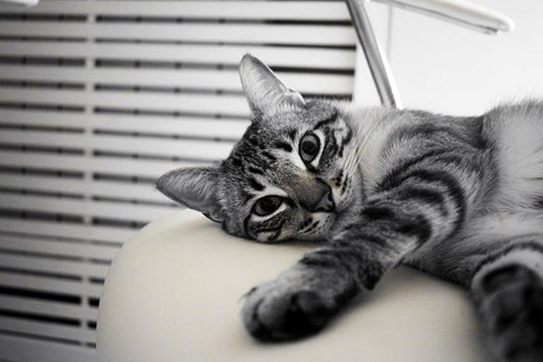 Planujesz adopcję kota? Dowiedz się, jak ochronić meble przed zniszczeniem